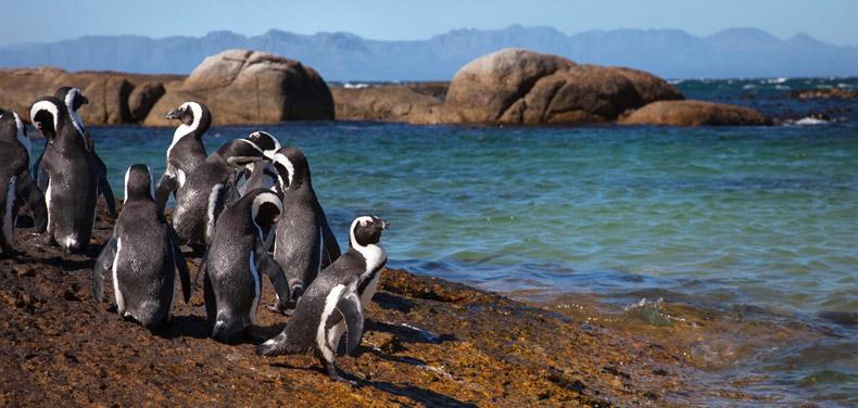 Penguins Matthew Cunningham