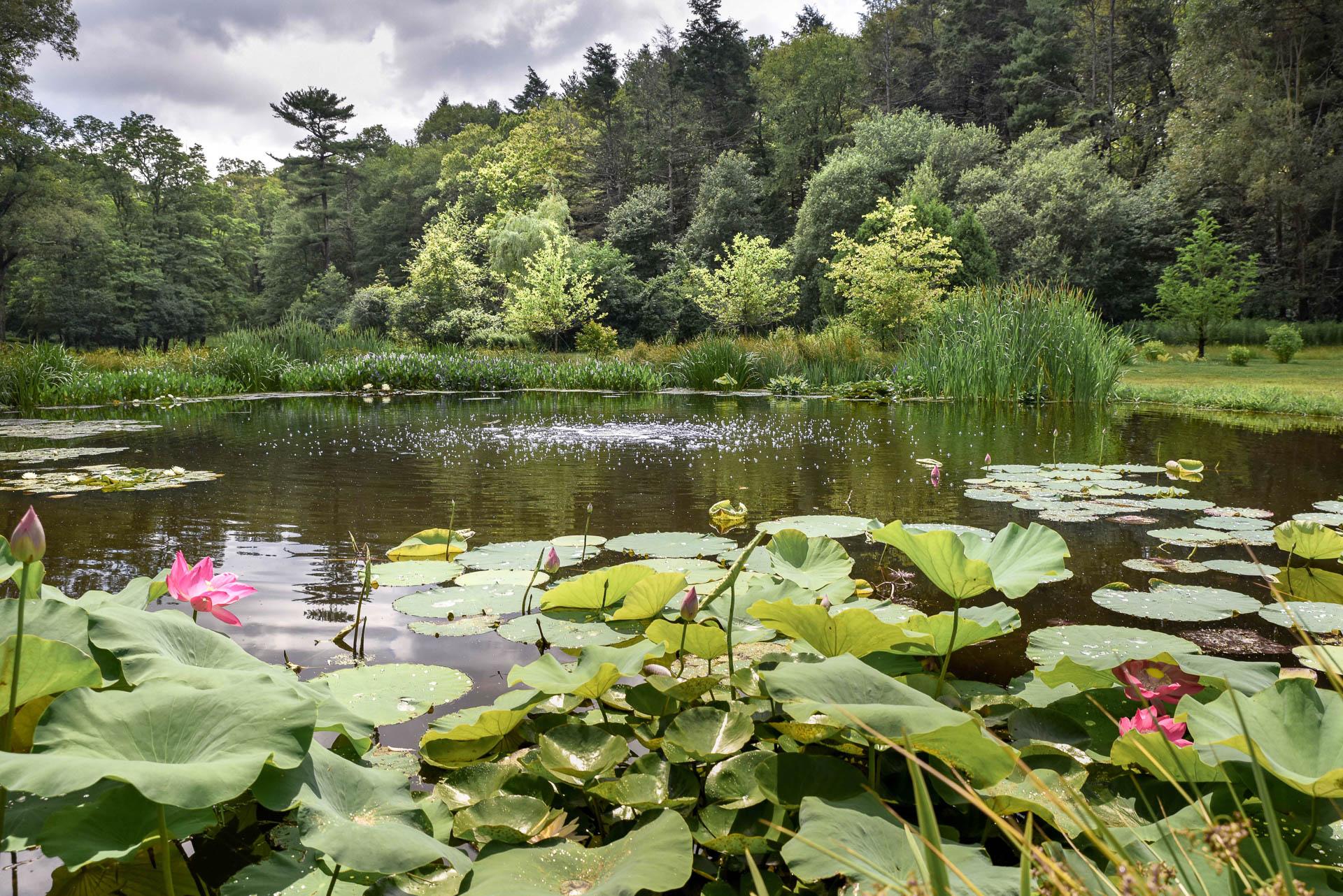 Larry landscape garden supply charlton ma for Estate landscape design